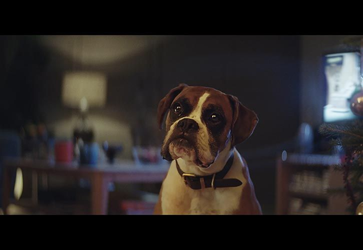 Buster The Boxer - John Lewis Christmas Ad 725 x 500