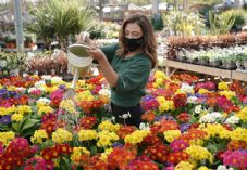 Dobbies sales assistant watering flowers